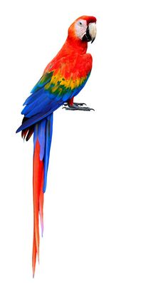 Blur Background In Photoshop, Desktop Background Pictures, Blur Background Photography, Blur Photo Background, Studio Background Images, Light Background Images, Parrot Image, Royal Chair, Parrot Painting