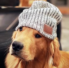 Golden in a love your melon beanie