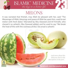 Melon is a summer annual plant that grows on the surface of the ground; it is a member of the squash family. It was first cultivated in Egypt and India, where it is mentioned in the medical books of the Ayurveda. From there it was brought to the Mediterranean region. It is one of the most important summer fruits because it contains a high ratio of water (90-93 percent)#DarussalamPublishers #IslamicMedicine #IslamicEBooks #AmazonKindle  #KindleStore #BarnesAndNoble