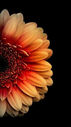 Flower Iphone Wallpaper, Flowery Wallpaper, Orange Wallpaper, Dark Wallpaper, Cellphone Wallpaper, Flower Backgrounds, Nature Wallpaper, Wallpaper Backgrounds, Spring Wallpaper