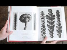 Episode 57 :: Karl Blossfeldt.We were thrilled to bits to find this on you Tube.Learn lots .