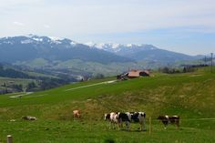 Visit Guggisberg, Switzerland, where my ancestors are from. Mennonite Jacob Mast left in 1737 and emigrated to Pennsylvania to William Penn's peace colony.