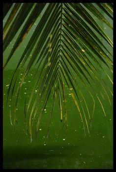Kerala #Vedanta Wake up!