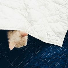 Two favorite things: cats and quilts.  by @yffoto (I think this is the Paris map)