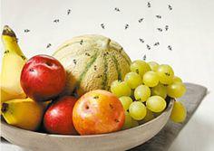 Comment éloigner les mouches de votre corbeille à fruits noté 5 - 2 votes Cette très vieille astuce permet d'éloigner les mouches de la coupe à fruits. c'est simple, naturel et efficace ! Ce dont vous aurez besoin : Une rape à fromage Du savon de Marseille ou du savon noir Du vinaigre de cidre...