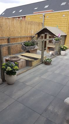 Bunny Sheds, Rabbit Shed, Rabbit Garden, Pet Rabbit, Rabbit Hutch Indoor, Rabbit Hutch Plans, Rabbit Hutches, Cavy Cage, Pet Cage