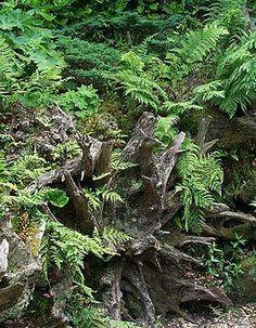 I want a stumpery so bad!