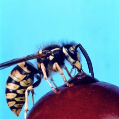 What Can You Put on a Plant to Keep Wasps Away?