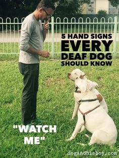 5 Hand Signs Every Deaf Dog Should Know! Deaf Dog Training, Puppy Training Tips, Dog Sign Language, Aggressive Dog, Dog Hacks, Dog Signs, Service Dogs, Dog Care, Puppies