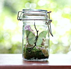 Butterfly Terrarium Kit, Eco Friendly Gift, Real Butterfly in Glass Jar, Green and Purple, Gardener and Naturalist, Woodland, Outdoors