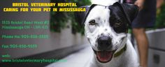 We are the best care hospital in Mississauga. We provide emergency checkup dental care diagnosis & small surgical operations. Veterinary Services, Veterinary Care, Care Hospital, Vet Clinics, Animal Care, Pet Health, Dental Care, Bristol, Your Pet