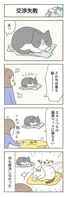 Amazon.co.jp: うちの猫がまた変なことしてる。: 卵山 玉子: 本