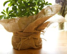 Dress up a plastic planter or put plants in burlap for a bio-degradable option that can also be planted directly in the ground! #DIY