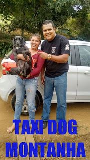 TAXI DOG MONTANHA TRANSPORTE DE ANIMAIS NO RIO DE JANEIRO: LUISA E A LINDA LABRADORA PRETINHA!