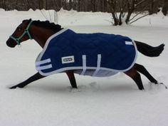 Pharoah blazing through the snow!