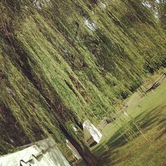 This is my willow tree!! I borrow it every year for a few days! #clfair #yay! | Flickr - Photo Sharing!