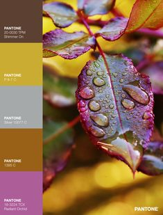Palettes / Color : No. 28 Plant Leaves, Palette, Plants, Color, Colour, Pallet, Pallets, Flora, Plant