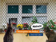 #Mietirrtümer: Katzengitter sind laut Amtsgericht Schorndorf auf dem Balkon erlaubt, wenn sie keine optische Beeinträchtigungund keinen Eingriff in die Bausubstanzdarstellen. Kann das Katzengitter also jederzeit ohne bleibende Rückstände wie Bohrlöcher wieder abgebaut werden & beeinträchtigt die Optik der Hausfassade nicht, stehen die Chancen gut, dass der Eigentümer zustimmt.  #Mietrecht #Balkon #Katzen