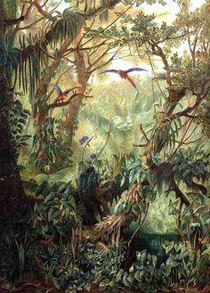 """Olímpia Reis Resque: À medida que o dia avançava """"...Começava então o breve coro dos animais da floresta à hora do crepúsculo, no qual ressaltavam os macacos uivadores, cujos gritos apavorantes e sobrenaturais exacerbavam a sensação de solidão que nos assaltava à medida que as trevas se tornavam mais profundas..."""". Texto de Henry Walter Bates (1825-1892). Ilustração em:  Peyritsch, J. J. ; Schott, H. W. Aroideae Maximilianae. 1879.  Desenho de Josef Selleney www.plantillustrations.org Leia… Tropical Garden Design, Tropical Art, Tropical Interior, Antique Illustration, Illustration Art, Jungle Art, Nature Paintings, Oil Painting Abstract, Botanical Art"""