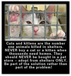 Cats & Kittens are the number one animals killed in shelters - please adopt don't shop!