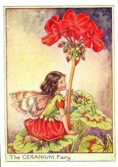 Geranium Fairy - My mom always had geraniums of different colors in her balconies...