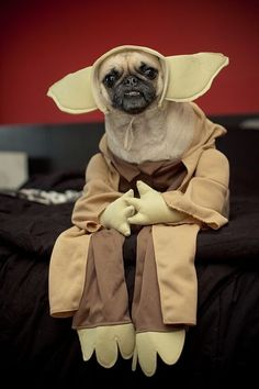 """Size matters not. Look at me. Judge me by my size, do you? Hmm? Hmm. And well you should not. For my ally is the Force, and a powerful ally it is."" - Funny Yoda pug dog costume aka Star Wars pet costumes."