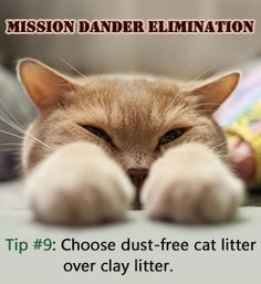 Tip to get rid of cat dander [Article]--tips for people with cat allergies who still love and want to own a cat TIP: Do NOT attempt to bathe an older cat who has never been bathed before. It is better to introduce a kitten (gently) to bathing. And be sens Cat Care Tips, Pet Care, Cat Allergies, Kitten Care, Owning A Cat, Pet Dander, Cat Health, Health Care, Cat Life