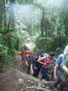 Trekking through the rainforest on Mount Kilimanjaro Kilimanjaro Climb, Heathrow Airport, High Hopes, The Great Outdoors, Trekking, Climbing, Places To Visit, Africa, Hiking