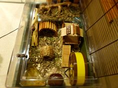 Nature looking Hamster home. Never thought of doing this with the cage I used to have lol. Hamster Habitat, Hamster Toys, Hamster Treats, Hamster Stuff, Dwarf Hamster Cages, Cool Hamster Cages, Rat Cage, Cat Room, Homemade Toys