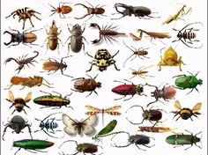 ...  bed insects can also cover up in night stands, desks, and other kinds of…