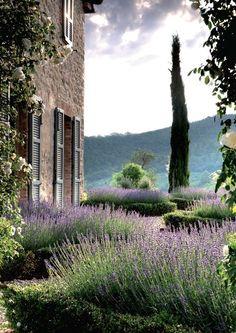 mediterranean garden design / lavender + cypress
