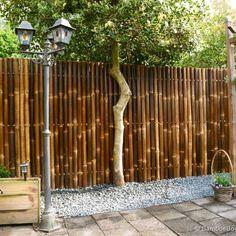 Amazing Bamboo Garden Ideas Backyards New Bamboo Backyard Bamboo Landscape Backyard Bamboo Garden Ideas – Homedecor
