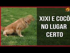 Ensine  a fazer Xixi e Cocô no Lugar Certo - Adestramento - YouTube