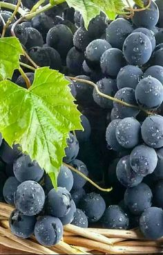 Nadire Atas on Wine Making From Grapes All Fruits, Fresh Fruits And Vegetables, Fruit And Veg, Photo Fruit, Soy Milk Nutrition, Vegetable Pictures, Fruits Photos, Fruit Photography, Vides