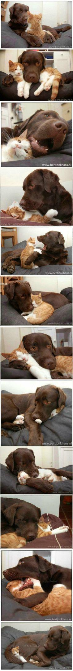 Lovely cat & dog!