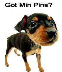 Got Min Pins?  my first luv was a min pin named Izzy. She will always be my 1st luv