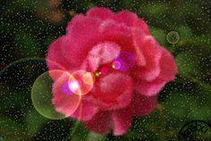 Rózsás képeslap