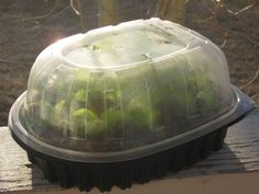 Seed Starting Cheap Mini Greenhouses for Seed Starting ~Family Food Garden - Great indoor mini greenhouses! Use a mini greenhouse for seed starting or to grow small plants. An indoor greenhouse takes up less space Diy Mini Greenhouse, Miniature Greenhouse, Indoor Greenhouse, Greenhouse Plans, Indoor Garden, Cheap Greenhouse, Greenhouse Wedding, Homemade Greenhouse, Portable Greenhouse