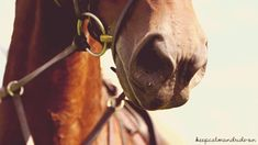 Horse's gif folder by RinaKisaragi on deviantART love to feel them breath after a hard run