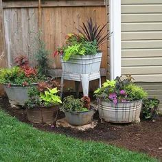 Bucket garden...