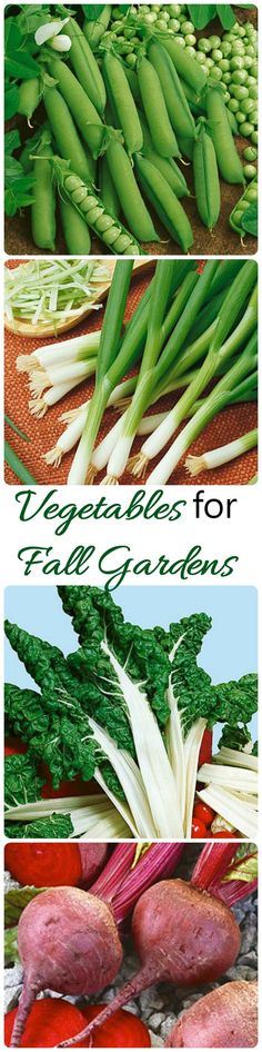 You can still grow vegetables in the fall!