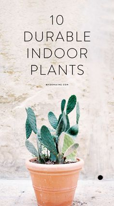 10 indoor plants tha
