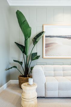 Kyal and Kara used Hycraft& Ravine carpet in colour Oatmeal in their media room. This multi-levelled loop pile carpe… Bedroom Carpet, Living Room Carpet, Living Room Green, Living Room Decor, Living Room Plants, Kyal And Kara, Birds Of Paradise Plant, Decoration Entree, Home Interior