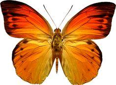 Renkli Kelebek Desenleri