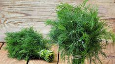 Tzatziki, Korn, Herbs, Balcony, Herb, Medicinal Plants
