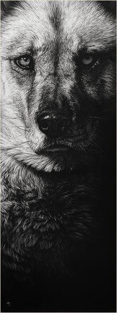"""Cristina Penescu, """"Forever Faithful"""", Husky/Shepherd Mix, Scratchboard"""