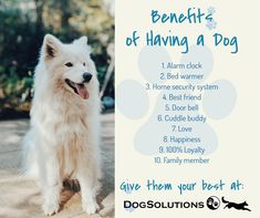 Exceptional Health Product Solutions for your Pet - Dog Solutions Dental Health, Pet Health, Pet Dogs, Dog Cat, Pets, 4 Best Friends, Cuddle Buddy, Words To Describe, Home Security Systems