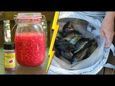 Pro-Cure Kokanee Killer Korn Dye and sweet corn make a fabulous fish bait, perfect for catching bluegill and other fish. A $8 laundry basket from IKEA makes ...