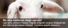 Firmiamo.it | Il primo sito italiano per creare petizioni online