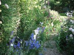Campanula, foxgloves and poppies Poppies, Garden Design, Explore, Plants, Poppy, Landscape Designs, Plant, Poppy Flowers, Planets
